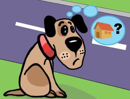 dicas para encontrar um cão perdido